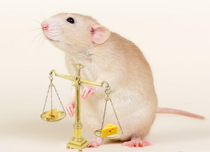 кто родился под знаком крыса